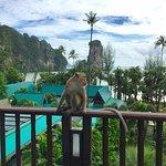 Monkeys! Plus room view
