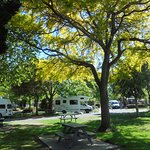 lovely trees within the Top 10 Holiday Park Hanmer Springs