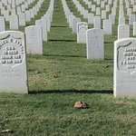 Rows and rows of gravestones