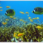 Snorkeling  Enjoy yourself with snorkeling as Indian ocean boast of its exotic coral reefs, attr