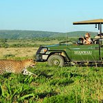 Game Drives at Shamwari Game Reserve