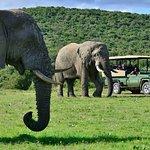 Game Drives at Shamwari Game Reserve
