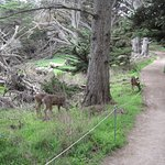 Photo of Point Lobos State Reserve