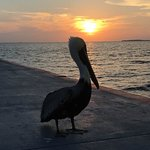 Pier at sunset with our pelican friend
