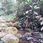 Reserva Biologica Los Cedros Foto