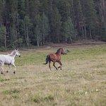Photo de Beaver Meadows Resort Ranch