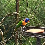 Photo of Melbourne Zoo