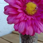 TA_IMG_20161210_134102_large.jpg