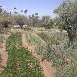 Nos cultures bio en contrebas de la ferme