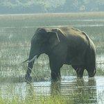 elephant sighted