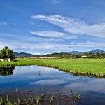 The view of the paddy field opposite the retreat
