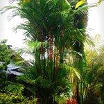 Photo of Sabai Resort