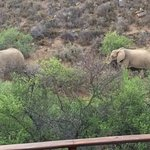 Elephants walking by our private deck