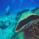 amazing deep dives, huge sponges, drift and clear playa del carmen scuba