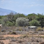 Sanbona Wildlife Reserve - Tilney Manor, Dwyka Tented Lodge, Gondwana Lodge ภาพถ่าย