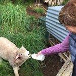 Foto de Coombe Farm Bed and Breakfast