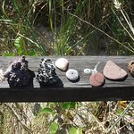 Some of the shells and rocks that we found beneath the waves