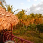 The cottages sit in an oasis of coconut and fruit trees. Air conditioning not needed!