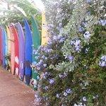 Aloha Surf Hostel Φωτογραφία