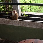 Balcony visitor