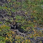 well-camouflaged blue heron