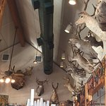 Just a few of deer heads hung on the walls.