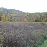 Hiking trails anyone?