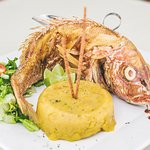 Red snapper, one of our specialties, accompanied by mofongo ..