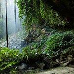 Dorrigo National Park, Crystal Shower Falls.