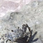 Sealife in the rocks on beach