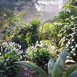 Spirogyra Butterfly Garden Photo