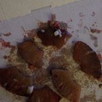 Esto es lo que venía encima de una de las pizzas que pedí , en teoría debía de ser piña , el col