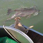 You can see how close we got to the dolphins!