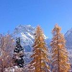 Lärchen im Winter und Bergwelt Scuol