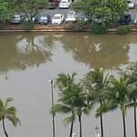 Photo de Waikiki Banyan
