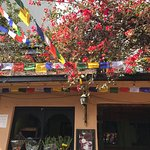 Photo of Delima Garden Cafe