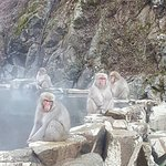 3hr Snow Monkey Tour 30mins drive - they help book.