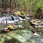 Berry Springs Nature Park Foto