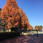 公園内の紅葉