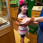 Meet live animals in the Saltonstall Animal Room