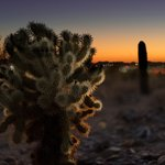 Scottsdale McDowell Sonoran Preserve