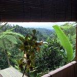 Sarinbuana Eco Lodge