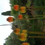 Photo of Jardi Botanic Marimurtra