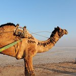 The desert and camel carts
