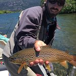 Golden Brown Trout from Rio Grande