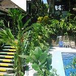 Photo of Hotel Mandarina