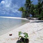 ' ' from the web at 'https://media-cdn.tripadvisor.com/media/photo-l/0d/e6/d2/1e/fresh-coconut.jpg'