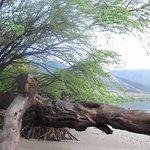 Photo de Camp Olowalu
