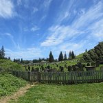 The old cementary