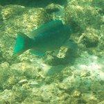 Coco Reef Tobago Foto